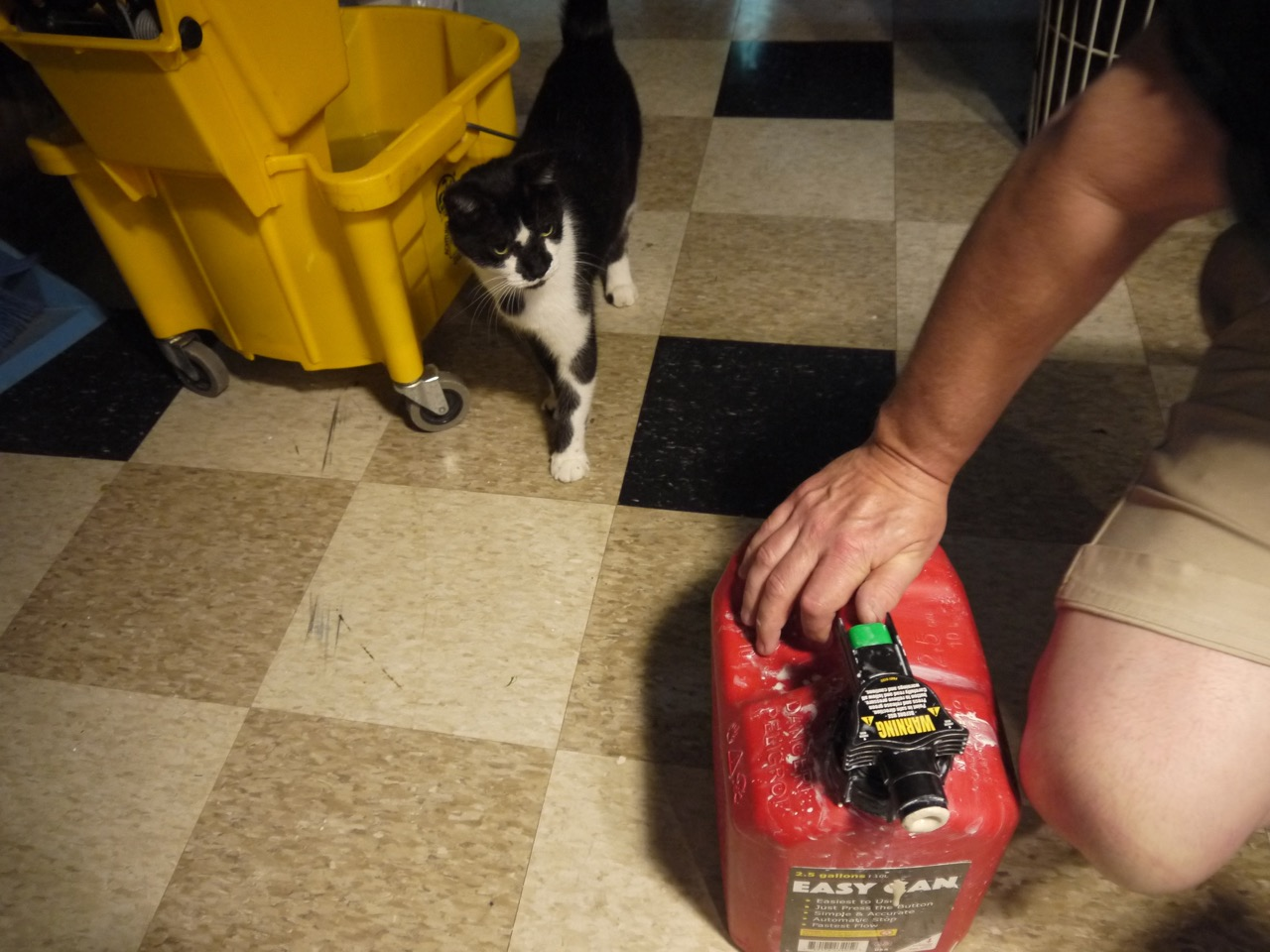 Pablo The Cat checking out my improvised slipcast container. This gasoline container has worked out very well.